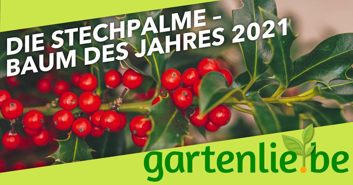 Em 2021 Baum