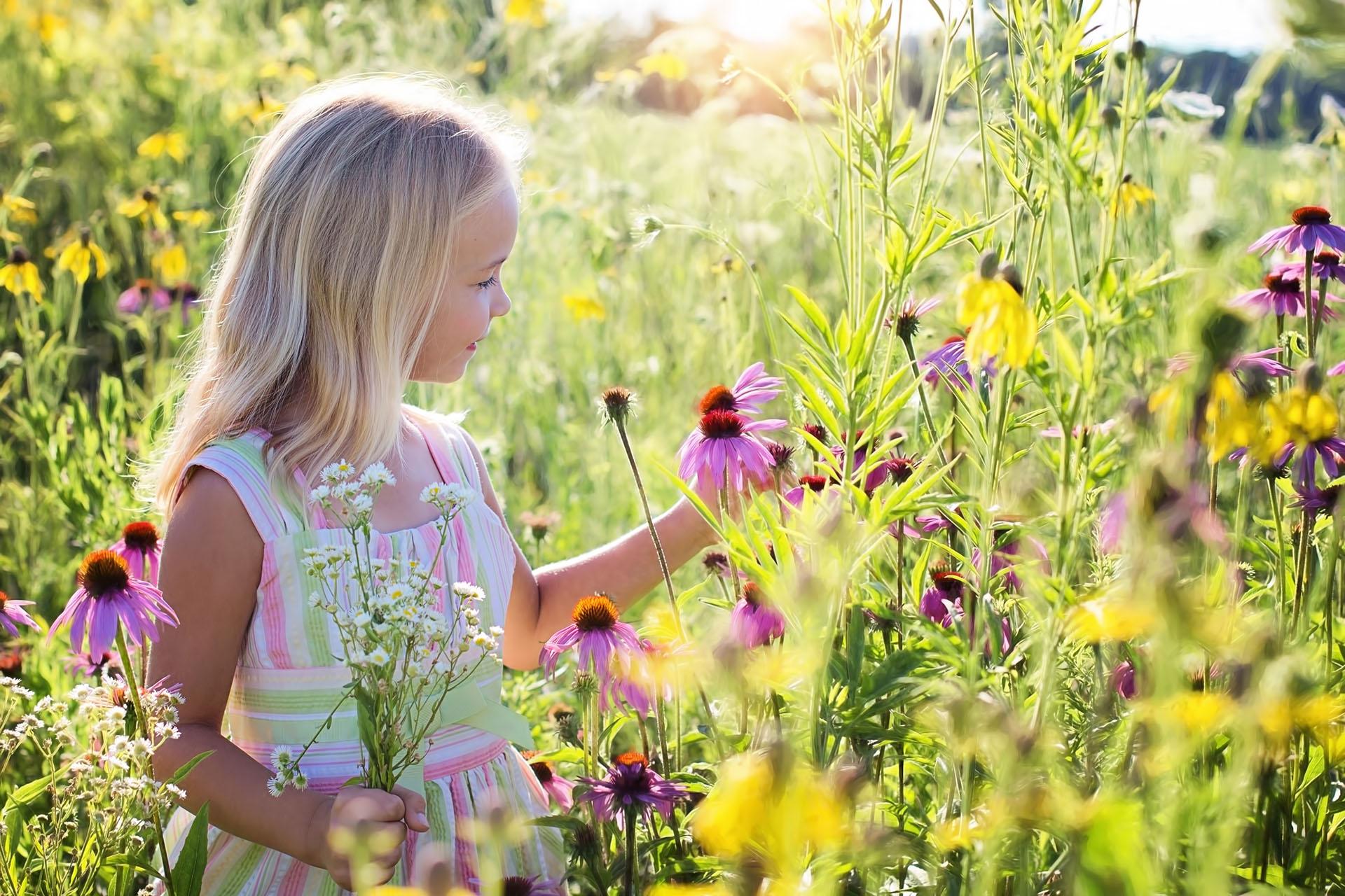 Blumen entdecken kennenlernen erforschen